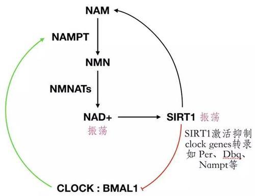 NMN最新提纯工艺使得新品抗衰老效力提高了三倍以上插图